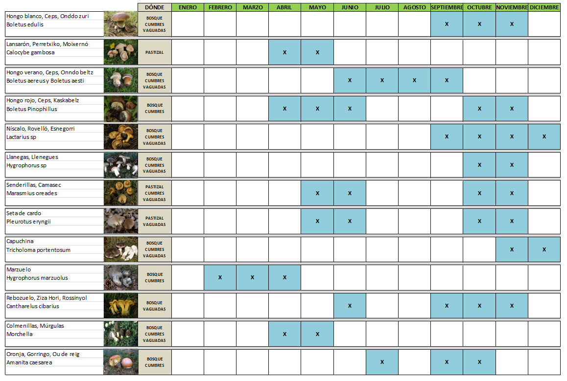 1-12-calendario-micologia